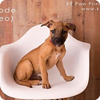 Adopt A Pet :: Geode - Pittsburg, CA