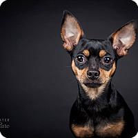 Adopt A Pet :: Frankie - China, MI