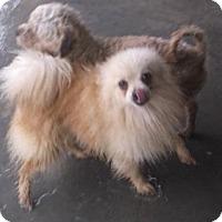 Adopt A Pet :: Patty - Bonifay, FL
