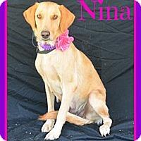 Adopt A Pet :: Nina - Plano, TX