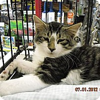 Adopt A Pet :: Hogan - Riverside, RI