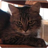 Adopt A Pet :: Jamie - Davis, CA