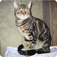 Adopt A Pet :: Azar - Portland, ME