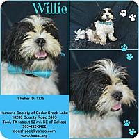 Adopt A Pet :: Willie - Plano, TX