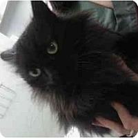 Adopt A Pet :: Nala - Staten Island, NY