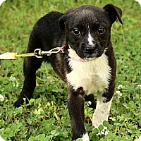 Adopt A Pet :: Quinn - Staunton, VA
