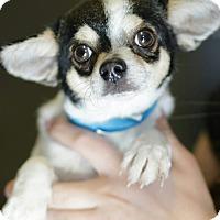 Adopt A Pet :: Michael - 6 lbs - Phoenix, AZ