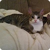 Adopt A Pet :: Tanner - Horsham, PA