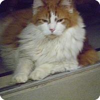 Adopt A Pet :: Alfie - Hamburg, NY