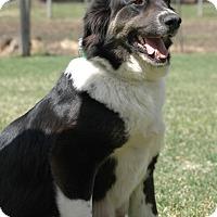 Adopt A Pet :: Queenie - Woodstock, ON