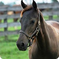 Adopt A Pet :: Wallace - Nicholasville, KY