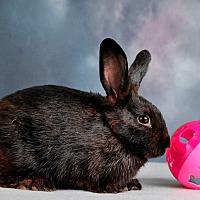 Adopt A Pet :: Lizzie - Marietta, GA