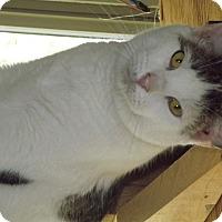 Adopt A Pet :: Bose - Shelbyville, TN