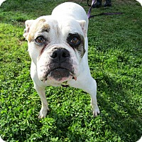 Adopt A Pet :: Pearl - Tillamook, OR