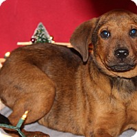 Adopt A Pet :: Rusty - Waldorf, MD