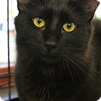 Adopt A Pet :: Odin - Yukon, OK