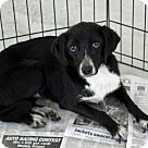 Adopt A Pet :: Shakes