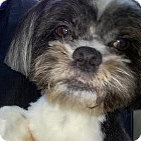 Adopt A Pet :: Christian - Orlando, FL