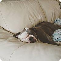 Adopt A Pet :: Blueberry - Decatur, IL