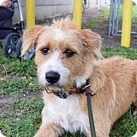 Adopt A Pet :: Bomar - Woonsocket, RI