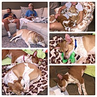 Adopt A Pet :: SPENCER AND SCOUT - PARSIPPANY, NJ