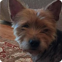 Adopt A Pet :: Trixie - Royal Palm Beach, FL