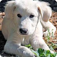 Adopt A Pet :: Tater - new pup! - Beacon, NY