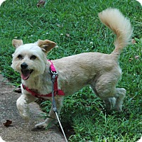 Adopt A Pet :: Sassy - Lawrenceville, GA