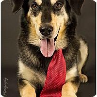 Adopt A Pet :: Jack is Reserved - Kirkland, QC