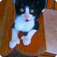 Adopt A Pet :: Hemi - Seminole, FL