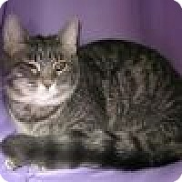 Adopt A Pet :: Felicia - Powell, OH