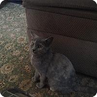 Adopt A Pet :: Kaylee Rosanna - Hazard, KY