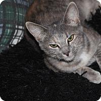Adopt A Pet :: Aurora KITTEN - tampa, FL