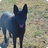 German Shepherd Dog Mix Dog for adoption in Nashua, New Hampshire - Eli