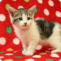 Adopt A Pet :: Mayflower - Yucaipa, CA