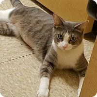 Adopt A Pet :: Amity - PetSmart - Kalamazoo, MI