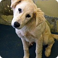 Adopt A Pet :: Shelby - Tulsa, OK