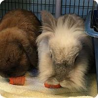 Adopt A Pet :: CUDDLES - San Clemente, CA