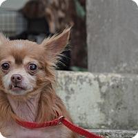 Adopt A Pet :: Gizmo - Washington, GA