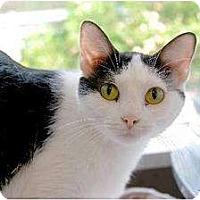 Adopt A Pet :: Abby - Manchester, MO
