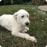 Adopt A Pet :: Delilah - Spring Valley, NY