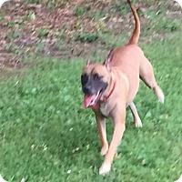 Adopt A Pet :: Shasta - North Brunswick, NJ