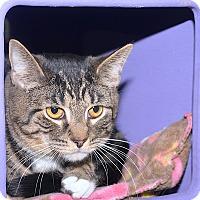 Adopt A Pet :: Peeta - Medina, OH
