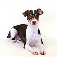 Adopt A Pet :: Candy - Bloomington, MN