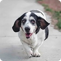 Adopt A Pet :: Dora - Acton, CA