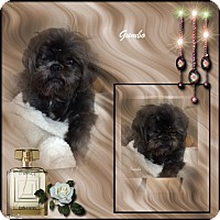 Adopt A Pet :: Gumbo - Crowley, LA