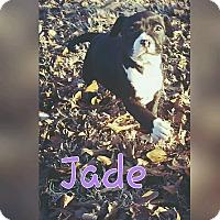 Adopt A Pet :: Jade - Broken Arrow, OK