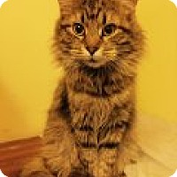 Adopt A Pet :: Flannery - Delmont, PA