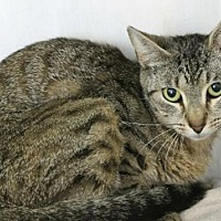 Adopt A Pet :: Dolphin - Hilton Head, SC