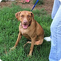 Terrier (Unknown Type, Medium) Mix Dog for adoption in Brattleboro, Vermont - Bradshaw